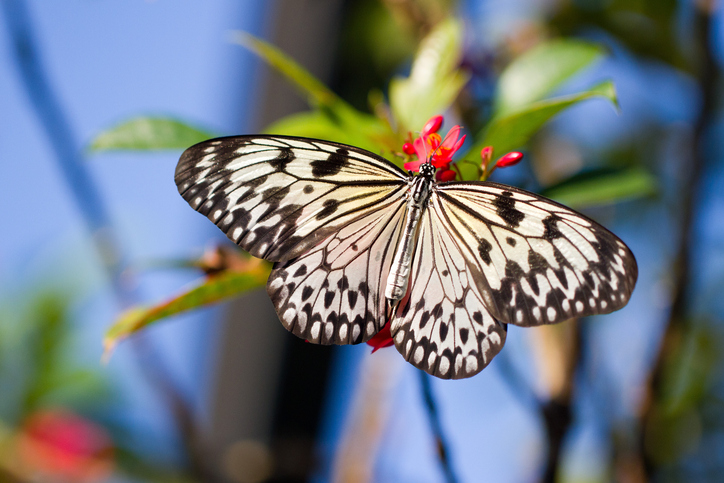Coconut Creek home care butterfly on blossom